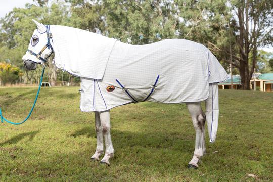 hooded horse rugs brisbane