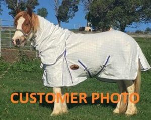 horse clothes, horse blanket, horse sheet,