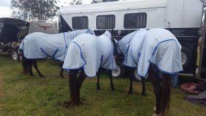 long lasting horse rugs,
