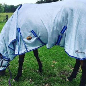 horse rugs, good quality horse rugs, durable horse rugs