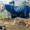 horse rug supplier Australia wide