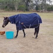 best winter horse rugs