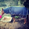Comfortable horse rugs