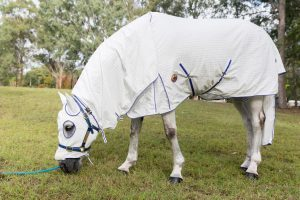 horse rugs melbourne, horse rugs st kilda, horse rugs bendigo, horse rugs geelong