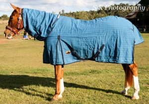 canvas horse combo rugs