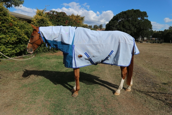 long lasting horse rugs