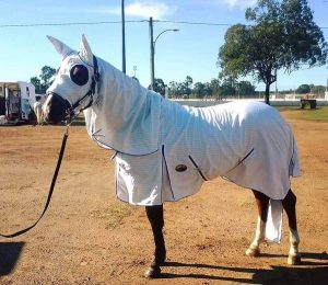 horse rugs, horse clothes, horse protection