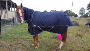 doona combo rainsheet horse gear,