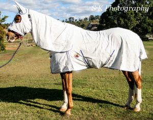 horse protection, horse insect free, horse pest free, fly rugs, stable rugs