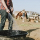 horses feeding and water