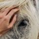 preventable horse diseases