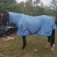 horse rugs Australia, horse rug combo, horse rug combo online