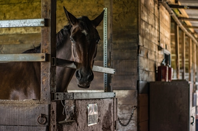 Horse inside of its stables