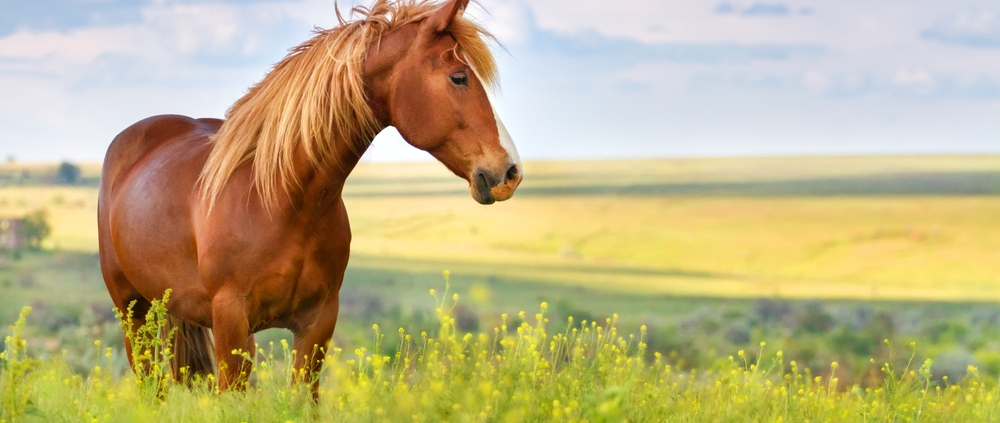 tick free horse