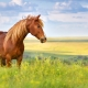 tick free horse in field not wearing horse rug