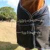 Horse rugs australia