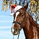horse gift ideas
