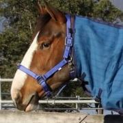 the horse rugs australia