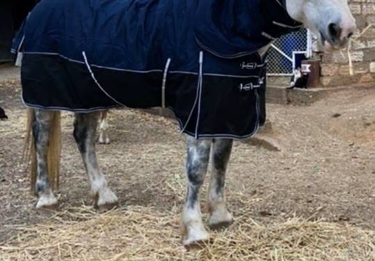 winter horse rugs australia