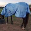horse eating wearing horse rug mesh combo