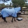 Horse wearing mesh horse rug combo